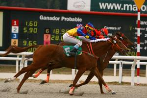 DDF horse racing