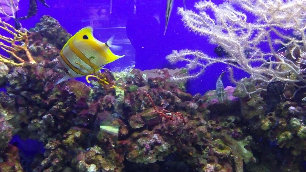 Dubai Aquarium Lost In Underwater Zoo Dubai Blog