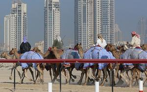 Thumbnail for Experience camel racing in Dubai