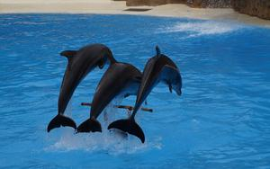 Thumbnail for Enjoy Dubai's Dolphin Show in Dubai Creek Park